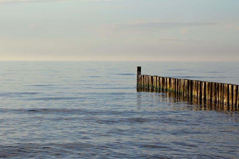 Pachwina przy przy morze bałtyckie plażą ustronia morskie, Poland w wieczór słońcu obraz stock