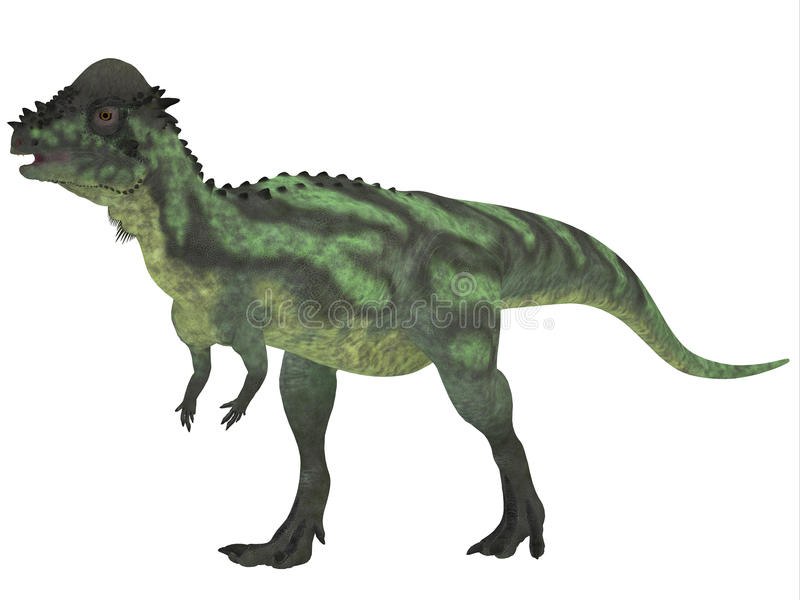 Pachycephalosaurus en blanco ilustración del vector