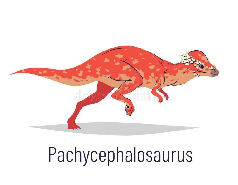 Pachycephalosaurus. Ornithischian dinosaur. Colorful vector illustration of prehistoric creature pachycephalosaurus in stock image