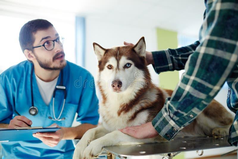 Paciente de las clínicas del veterinario fotos de archivo libres de regalías