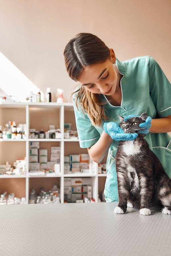 Paciente lindo El veterinario de sexo femenino joven en uniforme del trabajo está comprobando los dientes del gato negro que se s fotografía de archivo
