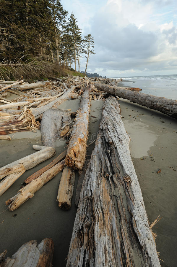 Pacific coast beach royalty free stock image