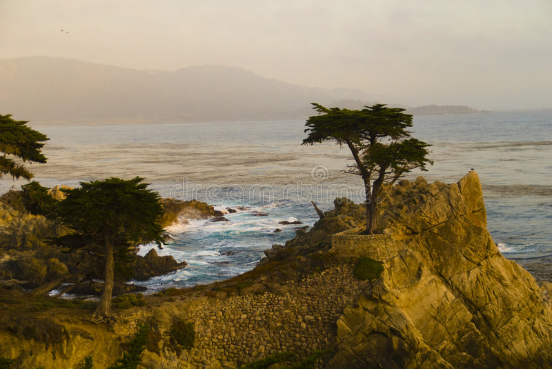 Pacific coast and cyprus tree. A warm sunset landscape of the rocky Pacific coastline and a lone Cyprus tree near Monterey and the Big Sur, California stock images