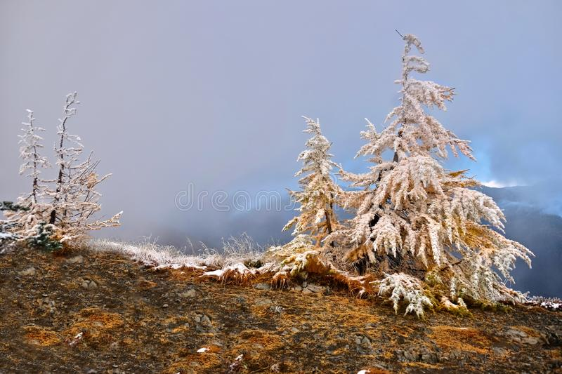 Frozen trees in early winter. Pacific Crest Trail through Pasayten Wilderness. North Cascade Mountains. Ocanogan National Forest. Seattle. Vancouver. Washington stock photos