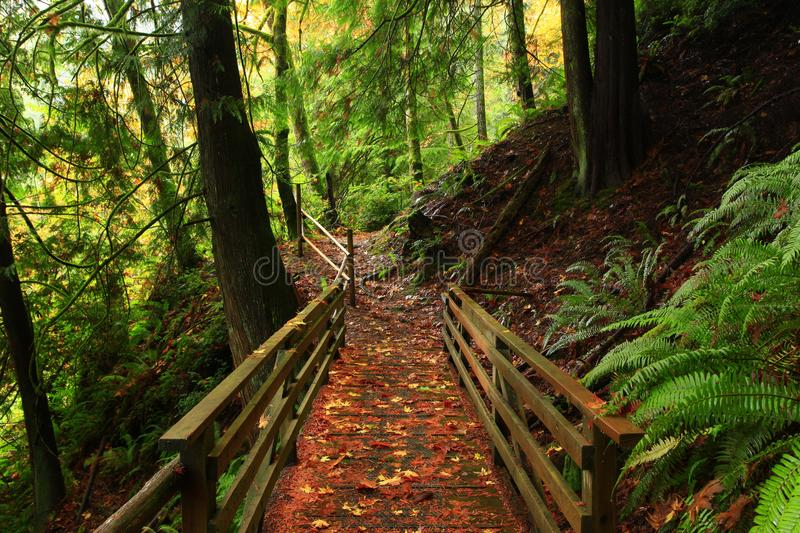 Pacific Northwest forest trail stock photo