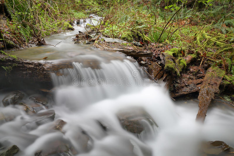 Pacific Northwest Rainforest Creek. A rushing mountain stream in a Pacific Northwest rainforest. United States stock photo