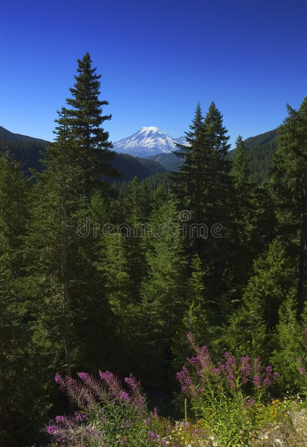 Pacific northwest wildflowers royalty free stock images