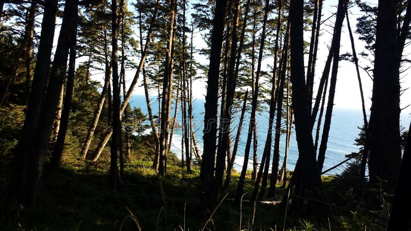 Cannon Beach through The Tree. The Pacific Ocean of Cannon Beach of Oregon through trees, on a summers day royalty free stock photography