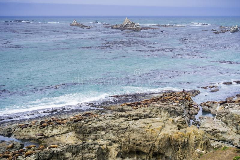 The Pacific ocean coast with sea lions resting on rocks, Cape Arago State Park, Coos Bay, Oregon royalty free stock image