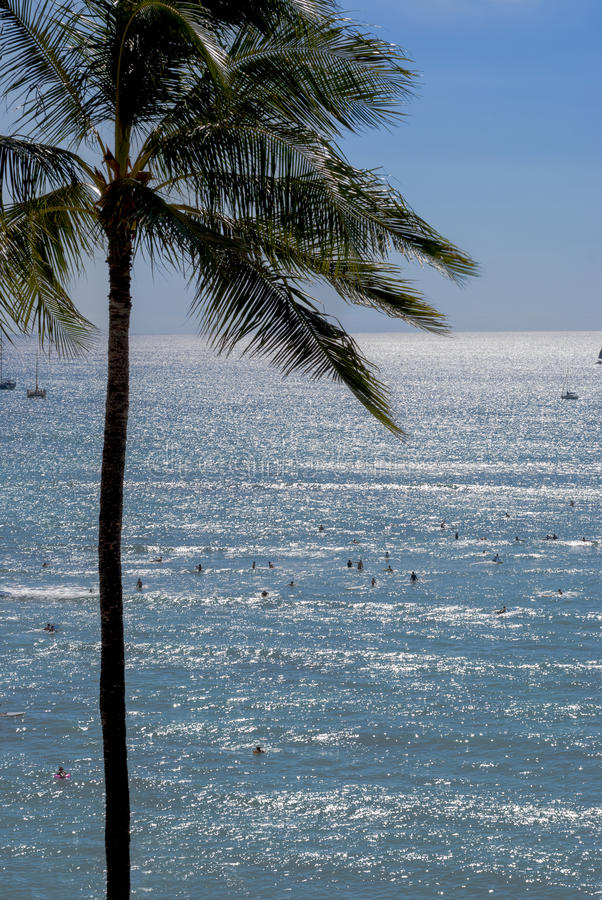 Pacific Ocean And Palm Royalty Free Stock Photography