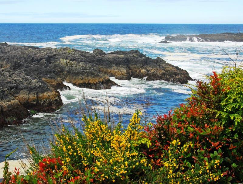 Pacific ocean and seashore royalty free stock photo