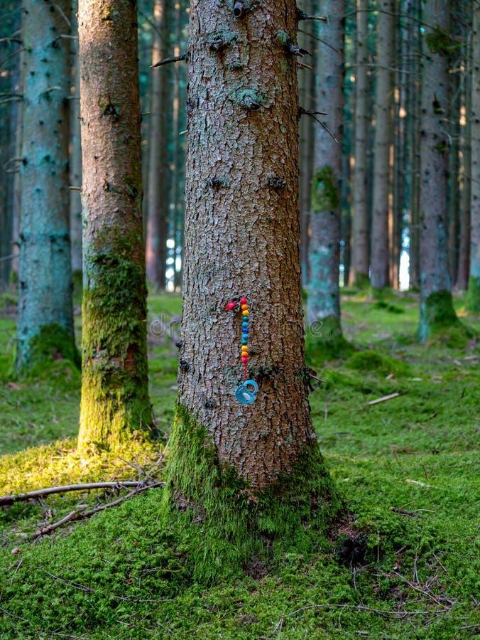 Pacifier на красочной цепи зафиксированной на коре дерева стоковое изображение
