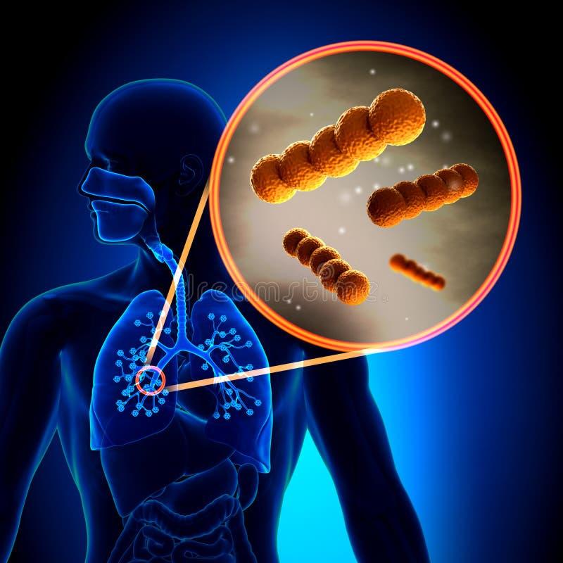 Paciorkowiec - Bańczaste pozytyw bakterie ilustracji
