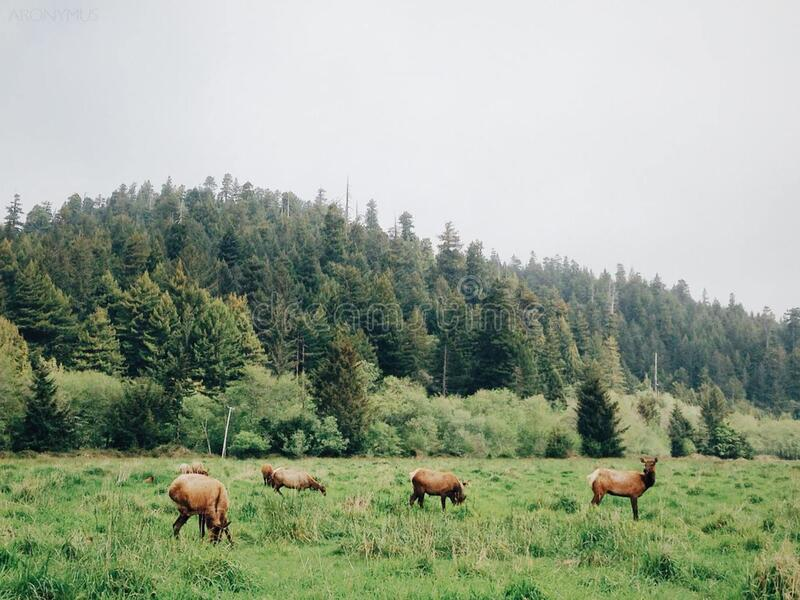 Pack of Deer Eating on Plane Grass Field during Daytime royalty free stock images