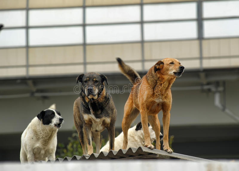 A pack of dogs. On the roof in an industrial zone royalty free stock photo