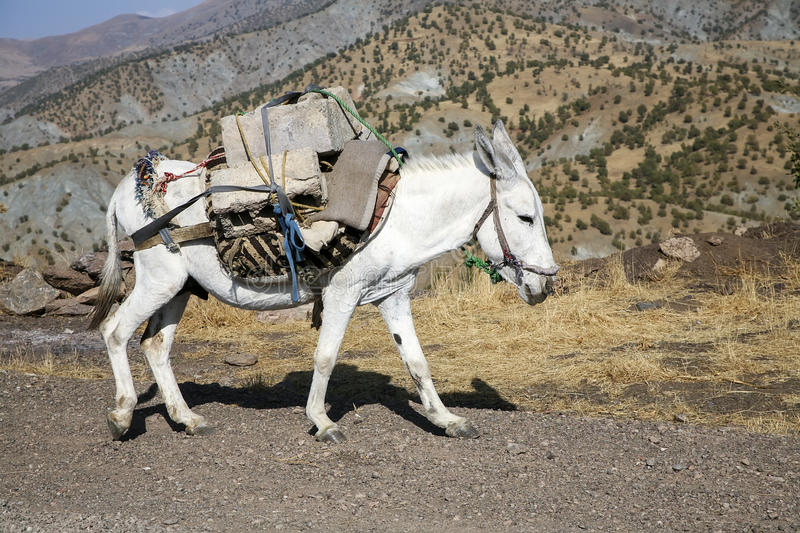 Pack horse stock images