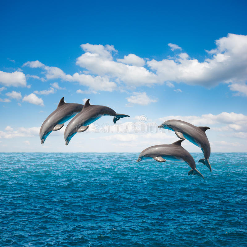 Pack of jumping dolphins. Pack of of jumping dolphins,beautiful seascape with deep ocean waters and cloudscape