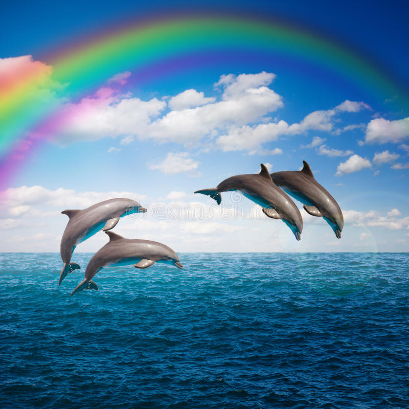 Pack of jumping dolphins. Pack of of jumping dolphins,beautiful seascape with rainbow with deep ocean waters and cloudscape