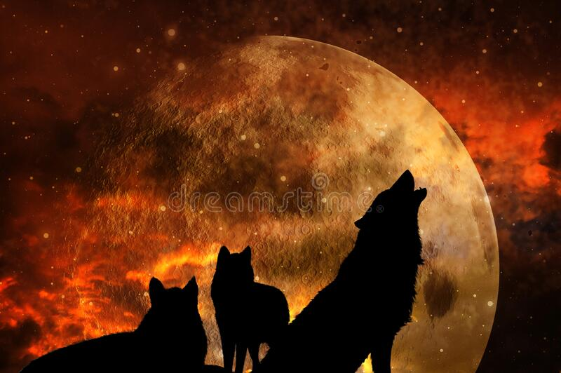 Pack of three wolves with universe and planet in sunset tonality royalty free stock photos
