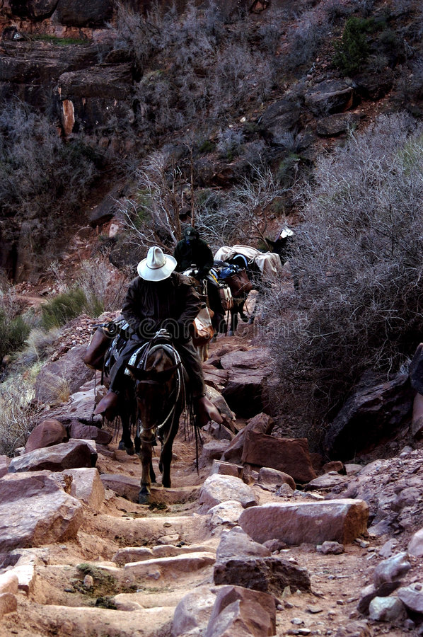 Pack Train,Mules,Grand Canyon royalty free stock photos