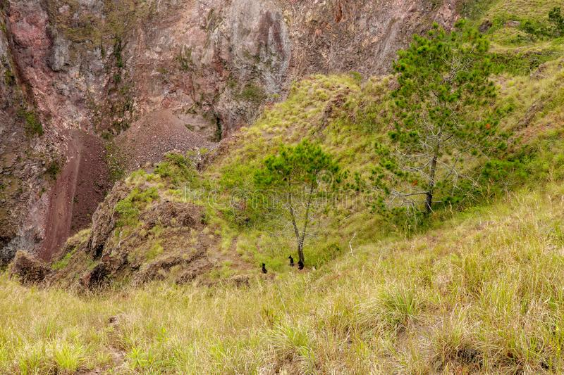 A pack of wild dogs at the top of the Batur volcano chased a lone macaque monkey and awaits what will happen next. Black dogs. royalty free stock images