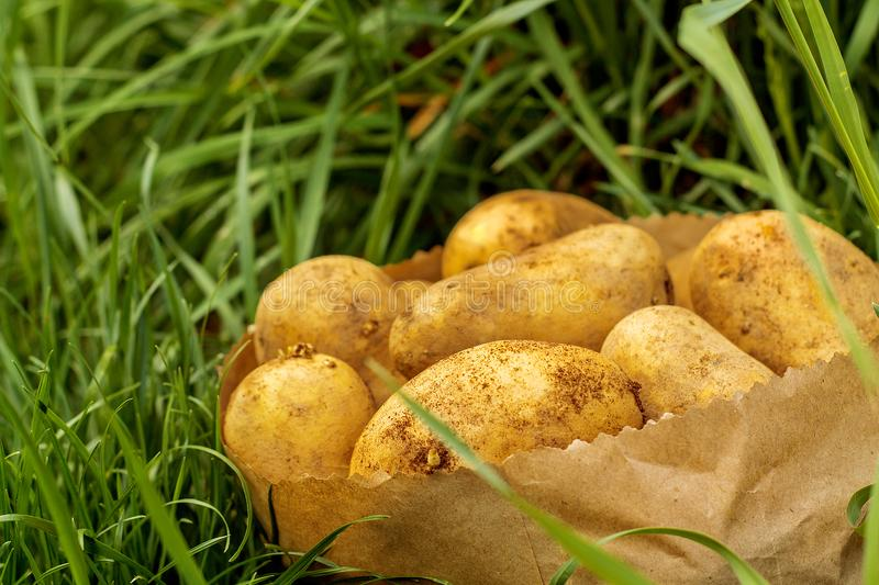 A package of potatoes standing in the grass royalty free stock photography