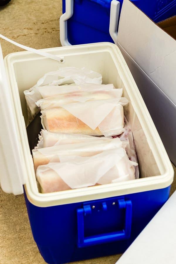Packande smörgåsar för en musikbandvägtur royaltyfri foto