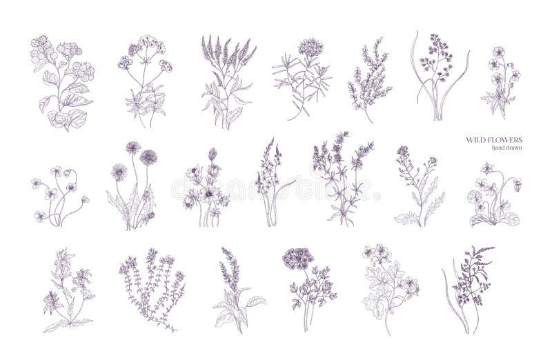 Packe av detaljerade botaniska teckningar av att blomma lösa blommor Samling av den drog örtartade handen för blomningväxter stock illustrationer