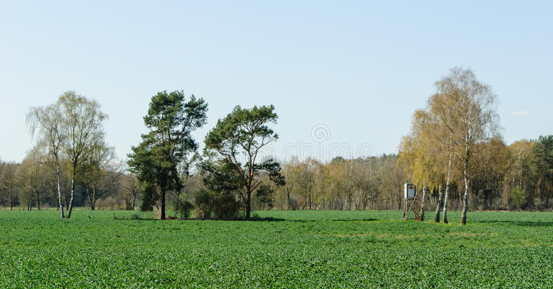 Kastenstand an einer Reihe der Birken stockbilder