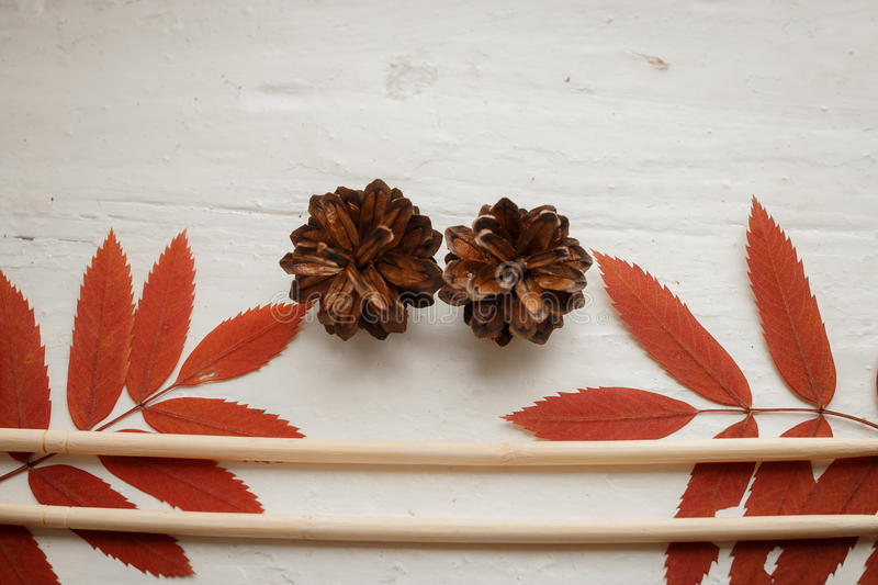 Packing: set of the Chinese sticks, branches a mountain ash and forest cones. Packing: set of the Chinese sticks, branches of a mountain ash and forest cones royalty free stock photography