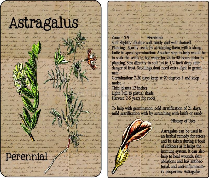 Pacote da semente do vintage do astrágalo foto de stock royalty free