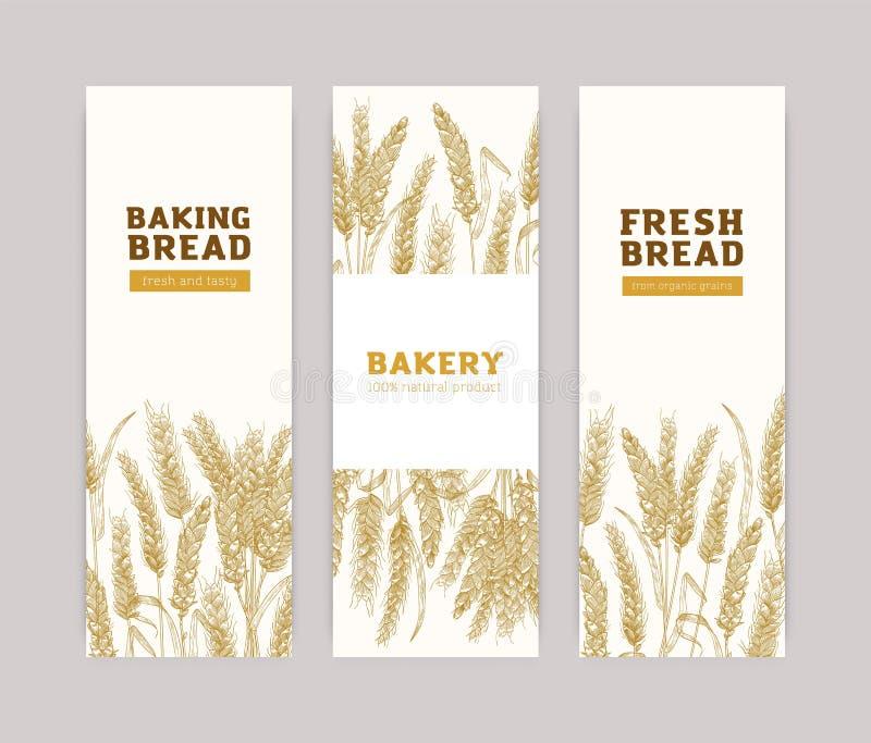 Pacote de moldes verticais da bandeira com as orelhas do trigo no fundo branco Produtos cozidos, pão, padaria, bakeshop ou ilustração do vetor