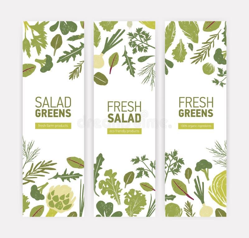Pacote de moldes verticais da bandeira da Web com vegetais verdes, as folhas frescas da salada e as ervas da especiaria no fundo  ilustração do vetor
