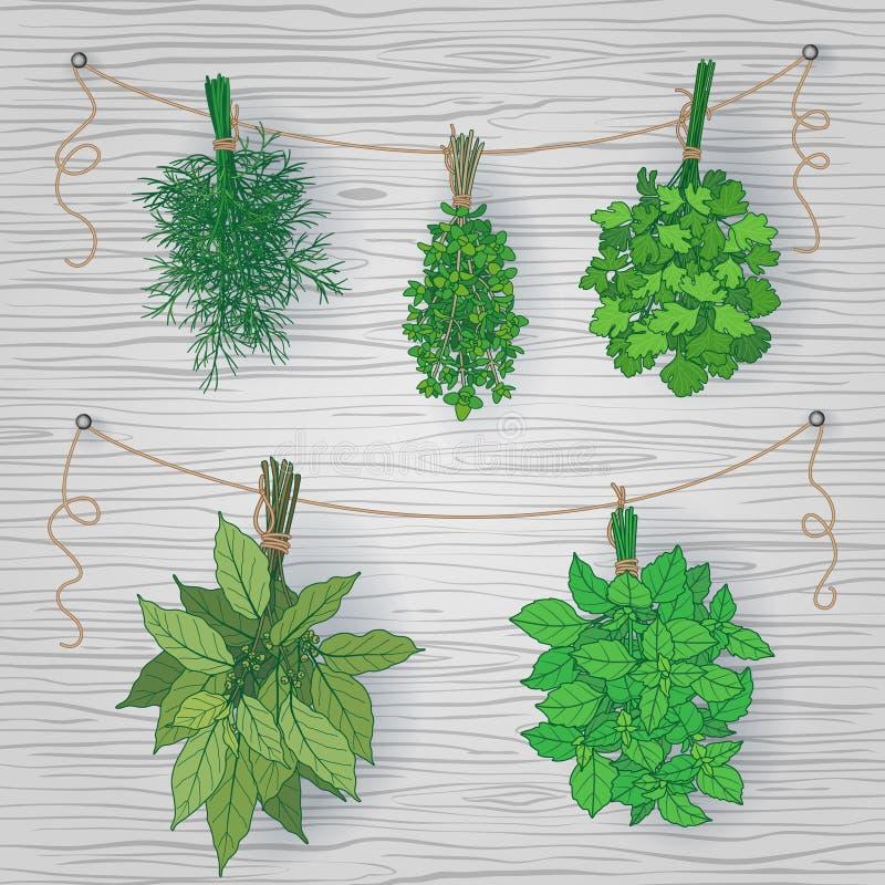Pacotes de ervas do tempero no fundo de madeira ilustração royalty free