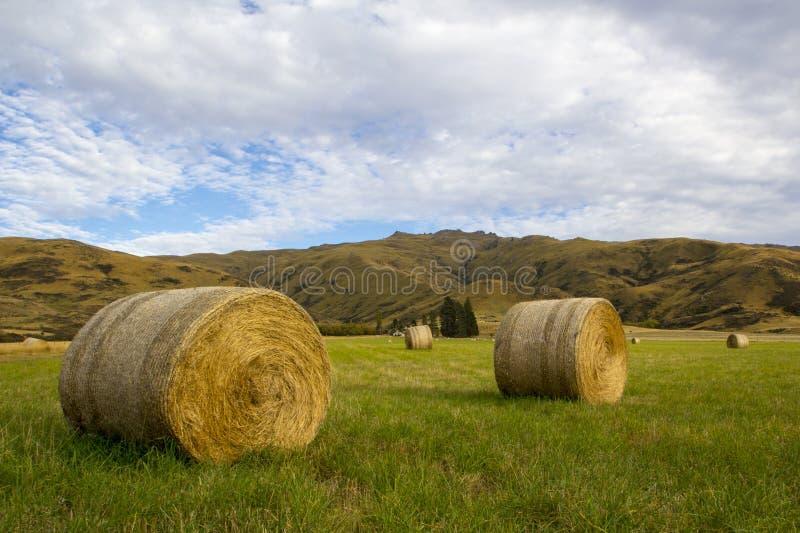 Pacotes de feno em um prado gramíneo, Otago, Nova Zelândia fotos de stock royalty free