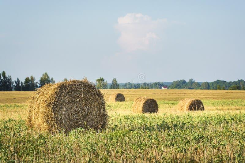 Pacotes do feno em um campo dourado chanfrado após ter colhido colheitas de grão imagem de stock royalty free
