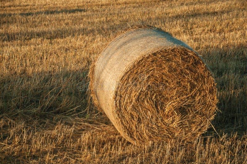 Pacotes do feno no por do sol em uma exploração agrícola fotografia de stock