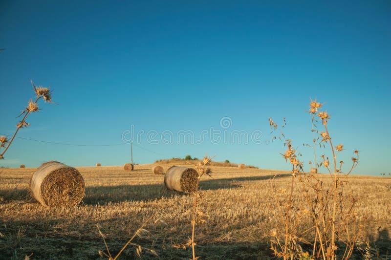 Pacotes do feno no por do sol em uma exploração agrícola fotos de stock