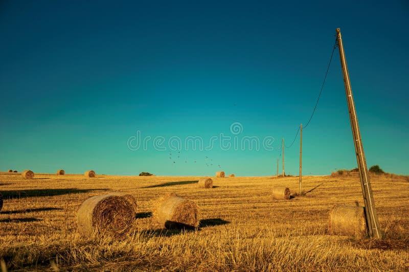Pacotes do feno no por do sol em uma exploração agrícola imagem de stock royalty free