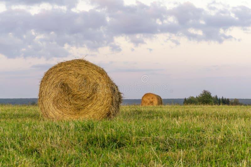 Pacotes redondos do feno em um prado chanfrado imagens de stock