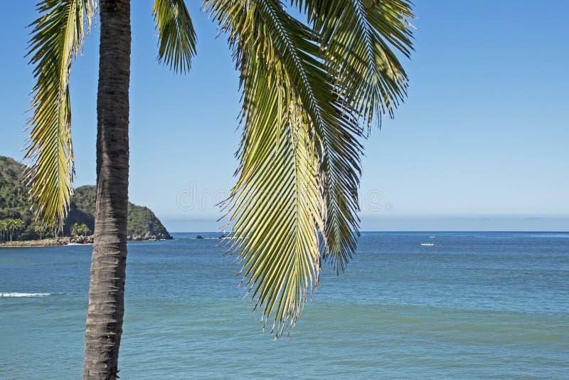 Pacyficznego oceanu wybrzeże z drzewkiem palmowym zdjęcia royalty free