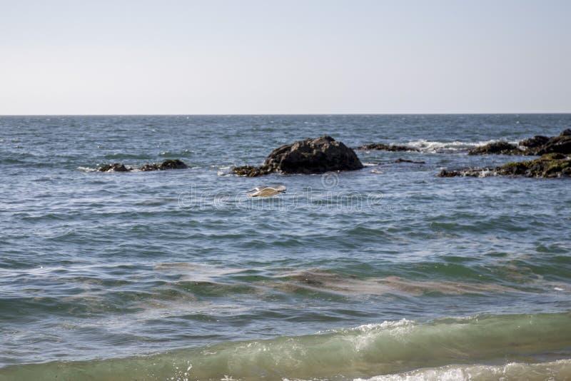 Download Pacyficzny Ocean Santiago De Chile Zdjęcie Stock - Obraz złożonej z piasek, plaża: 106902132