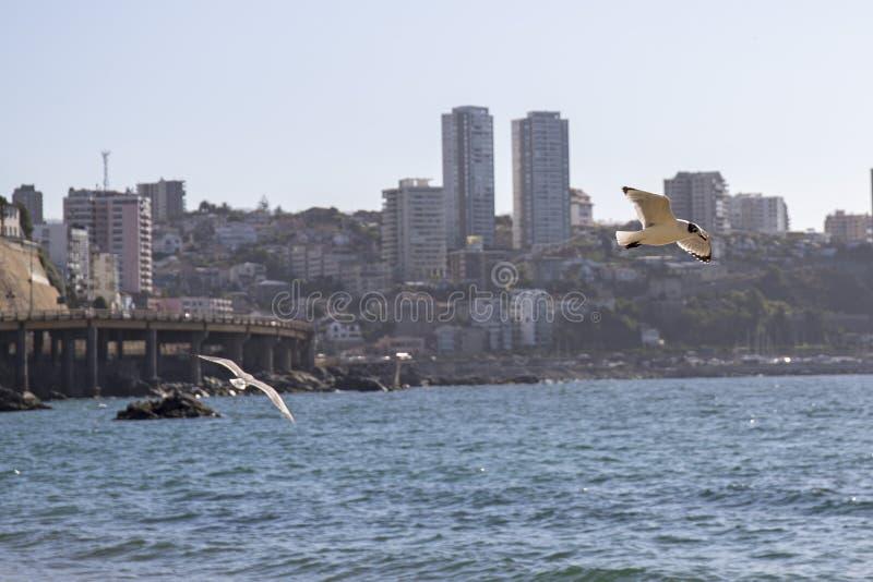 Download Pacyficzny Ocean Santiago De Chile Zdjęcie Stock - Obraz złożonej z pacific, valparaiso: 106902294