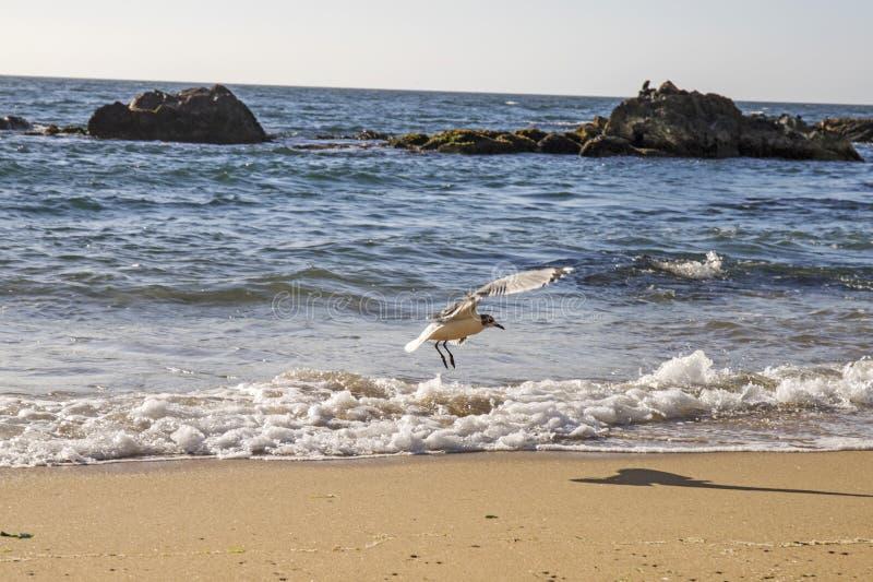 Download Pacyficzny Ocean Santiago De Chile Obraz Stock - Obraz złożonej z santiago, ocean: 106902299