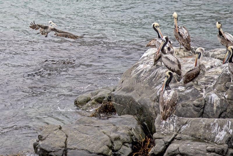 Download Pacyficzny Ocean Santiago De Chile Obraz Stock - Obraz złożonej z santiago, ranek: 106903229