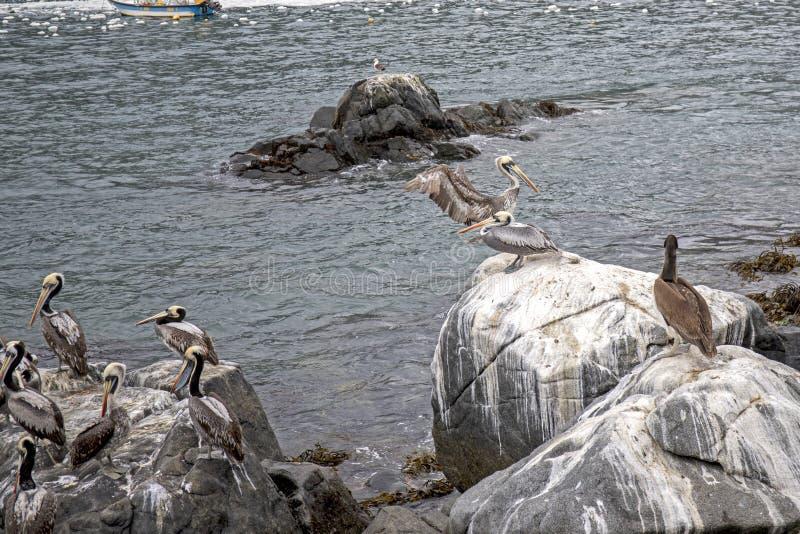 Download Pacyficzny Ocean Santiago De Chile Obraz Stock - Obraz złożonej z ranek, chile: 106903233