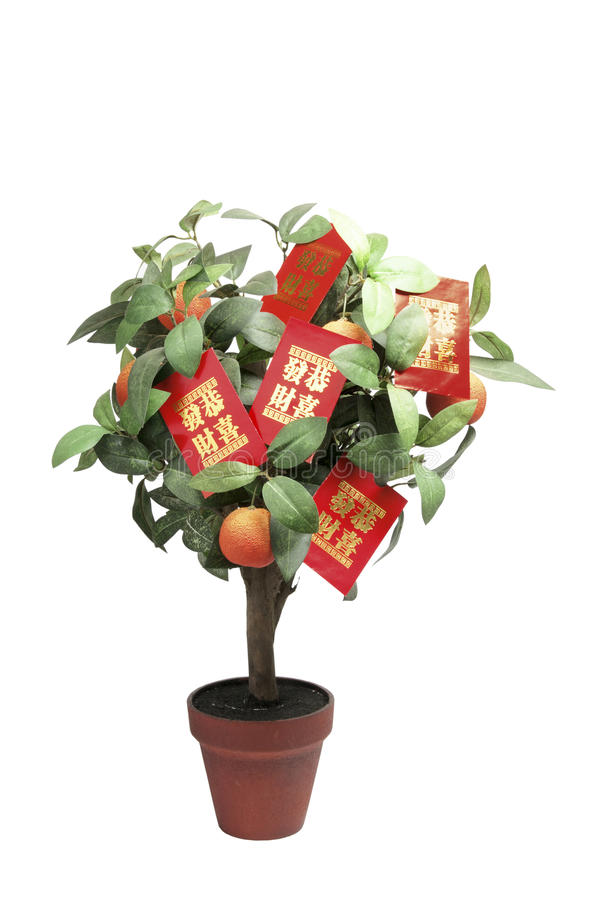 paczek rośliny czerwieni tangerine zdjęcie royalty free