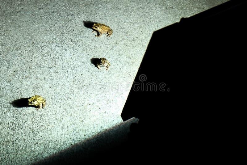 Pad voor lantaarn stock fotografie