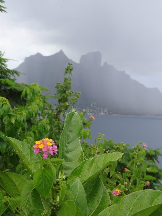 Pada na bor borach, kwiaty w przodzie zdjęcia stock