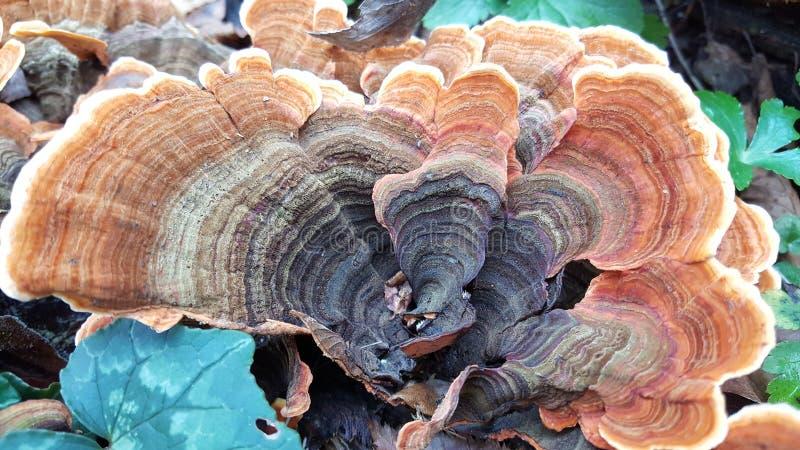 Paddestoel bij een boom royalty-vrije stock fotografie